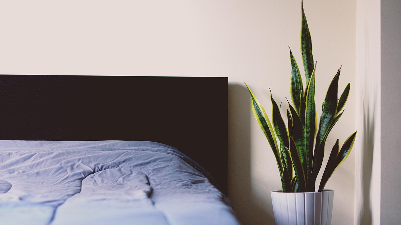 Sansevieria slaapkamer