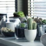 5 planten gemakkelijke verzorging botanische woontrend