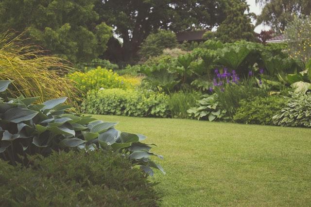 Tuin met planten